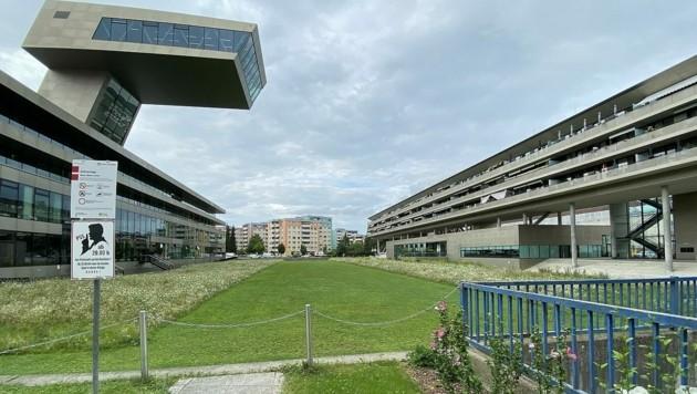Auf der ehemaligen Stadionwiese entsteht ein Gemeinschaftsgarten (Bild: Info-Z)