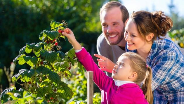 Kinder sollten nur unter Aufsicht eines Erwachsenen Beeren pflücken und verzehren.