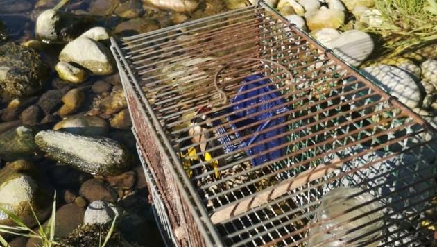 Der Vogel war im Käfig der Sonne ausgesetzt.