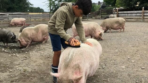 Die Tiere am Melcherhof genießen die Streicheleinheiten und die Pflege von den Kindern.
