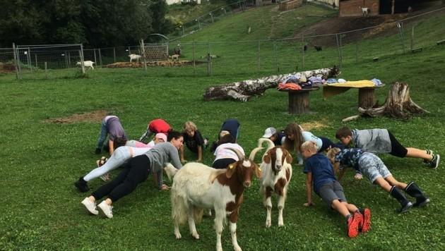 Yoga inmitten der süßen Ziegen macht natürlich viel Spaß.
