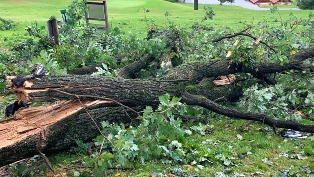 Der Auslöser für den Sturz eines Baumes auf den Kleinbus in der Gemeinde Burgauberg-Neudauberg (Bezirk Güssing) dürfte ein heftiges Unwetter gewesen sein.