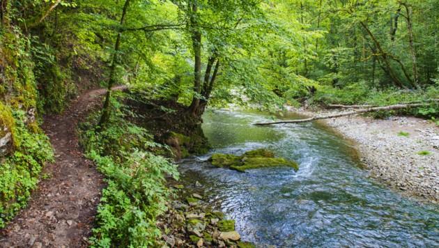 Nur noch 15 Prozent der Flüsse in Österreich sind ökologisch intakt. (Bild: ©Friedberg - stock.adobe.com (Symbolfoto))