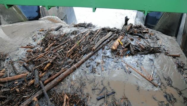 Der Fluss führte Unmengen an Treibholz mit.