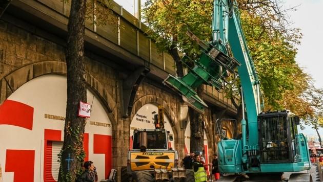Die Bäume fielen trotz allen Protesten, die versprochene Nachbepflanzung war für die Aktivisten kein Trost.