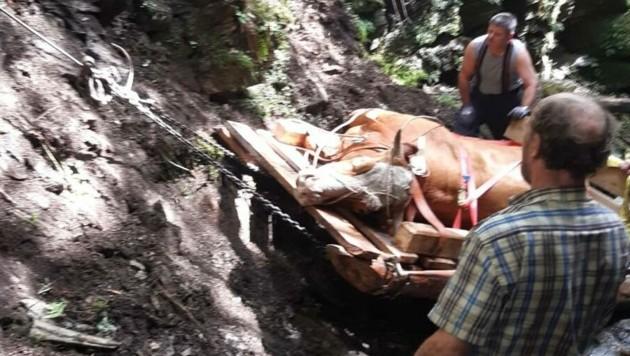 Das Tier blieb unverletzt.