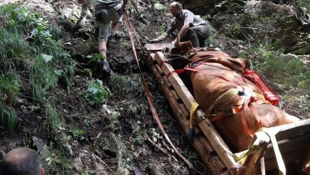 So wurde die Kuh nach oben transportiert.