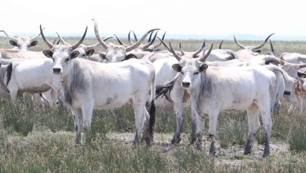 Die einzigartige Tierwelt in den Naturoasen beeindruckt regelmäßig Besucher. (Bild: Judt Reinhard)