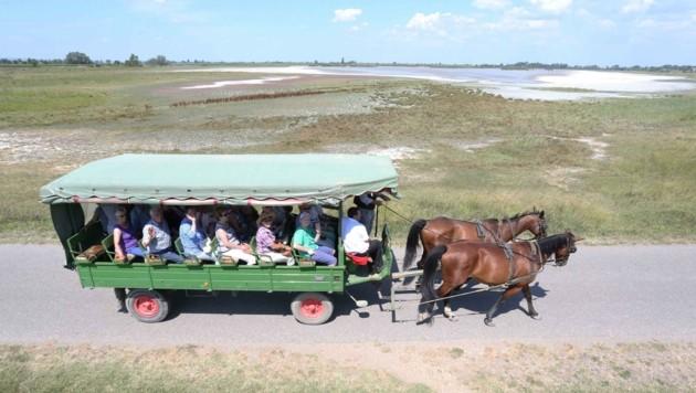 Ausflügler können die Fauna und Flora des Nationalpark Neusiedler See mit der Pferdekutsche zu erkunden. (Bild: Judt Reinhard)