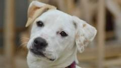 Rosie (Bild: Tierhilfe Süden Austria)