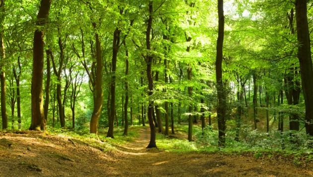 (Bild: ©Inga Nielsen - stock.adobe.com)