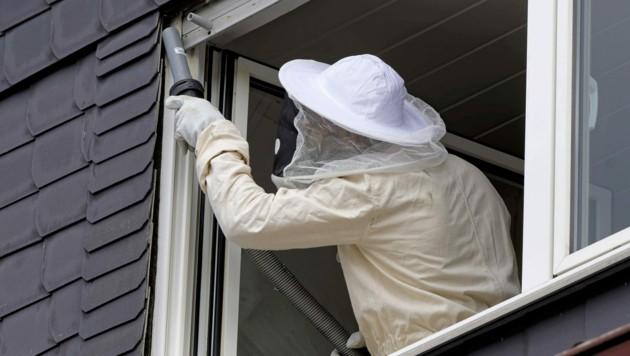 Professionell agiert hat der gerufene Schädlingsbekämpfer offenbar nicht (Symbolbild). (Bild: ©JuergenL - stock.adobe.com)
