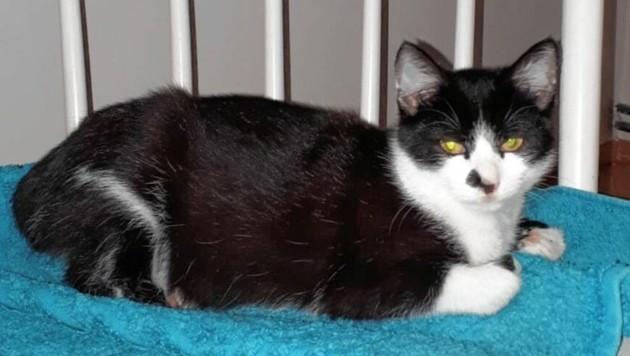 Diese Katze überlebte die Attacke. (Bild: zVg)