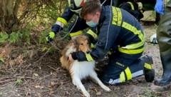 """Collie """"Joey"""" wurde aus dem Brunnenschacht gerettet. (Bild: Monatsrevue/Lenger Thomas)"""