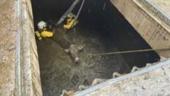 Mit schwerem Atemschutz musste die Feuerwehr zu dem tierischen Einsatz anrücken. (Bild: ZOOM.TIROL)