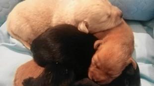Die fünf süßen Hundewelpen werden jetzt im Tierheim Parndorf mit dem Fläschchen großgezogen. (Bild: Melanie Leitner)