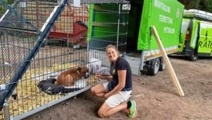 Mitarbeiter der Tierrettung fingen den Hund ein und versorgten ihn. (Bild: Tiko Klagenfurt)
