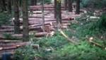 Heuer ist es im Wald entspannter: Aber der Fichte ist es schon lange zu warm. Der Temperaturanstieg durch den Klimawandel wird ihr weiterhin den Käfer bringen. (Bild: Scharinger Daniel)