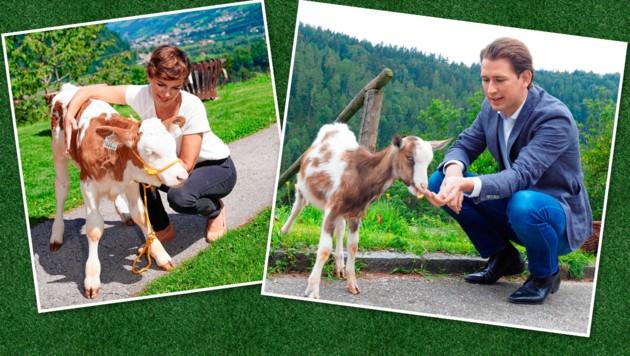 Kanzler Sebastian Kurz (ÖVP) und SPÖ-Chefin Pamela Rendi-Wagner als Tierfreunde. (Bild: Gabriele Moser, Kurt Prinz, Krone KREATIV)