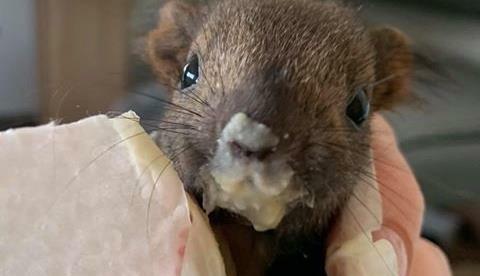 (Bild: Tierschutzverein Villach)