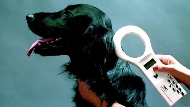 Mit einem Lesegerät kann man den Chip auslesen. Ent- oder zugelaufene Hunde können so von den Tierheimen viel schneller an ihre Besitzer übergeben werden. (Bild: zVg)