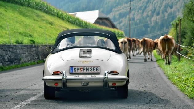 Warum ich das Lieser-Maltatal liebe? Weil hier die Natur noch dominiert. Kühe auf der Straße sind für uns Einheimische ganz normal, für viele Gäste aber wohl einzigartig. (Bild: ROLAND HOLITZKY)