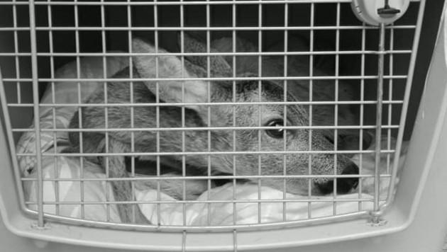 (Bild: Tierrettung Oö)