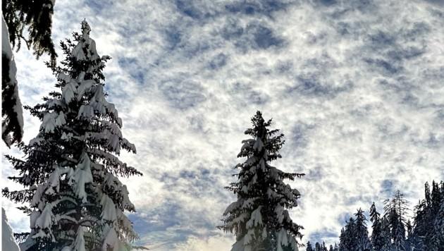 Kindheitserinnerung an den traumhaften Winterwald (Bild: Dominik Orieschnig)