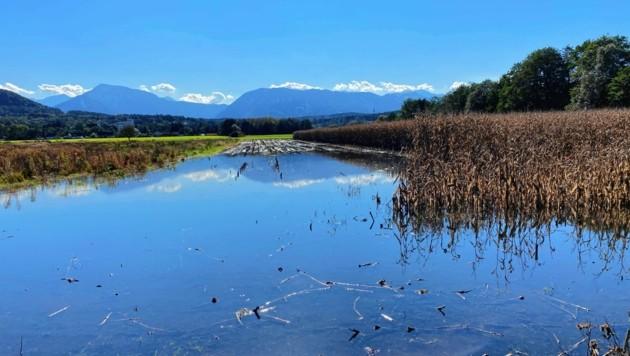 Im Klagenfurter Becken stehen einige Felder unter Wasser, der Sattnitzfluss (Wörthersee) und einige andere Seeabflüsse führen Hochwasser. Jetzt ist jeder Liter Regen einer zu viel. (Bild: Thomas Leitner)