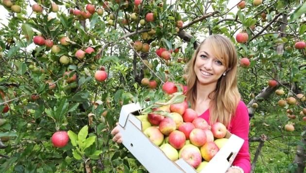 Heimische Äpfel versprechen erfrischenden Geschmack und beste Qualität beim Fruchtsaft. (Bild: Judt Reinhard)