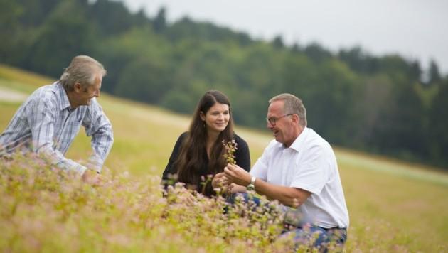 250 Hektar Hadn findet man im Jauntal. Josef Hirm kennt die Tradition. (Bild: Evelyn Hronek)