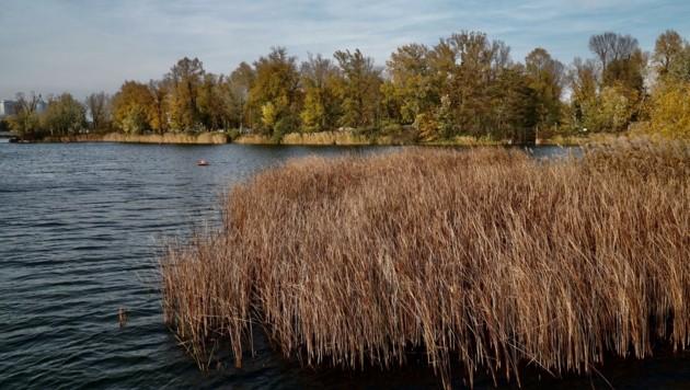 Es herbstelt an der Donau. (Bild: Leserreporter/ Erich H)