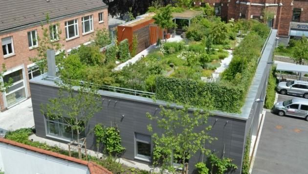 Eine optimale Begrünung für ein großes Dach. (Bild: baustoffwissen)