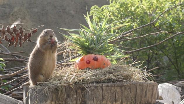 (Bild: Zoo Salzburg)