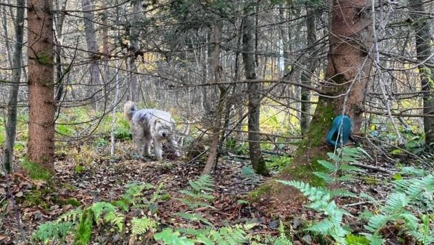"""Hund """"Maxl"""" hatte sich im Wald verheddert. (Bild: Alexandra Grunow)"""