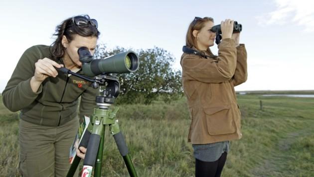 Vogelkundler hoffen nun einen Blick auf den neuen Gast zu erhaschen. (Bild: REINHARD HOLLReinhard Holl)