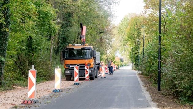 Naturnaher Gehweg in der Firmianstraße (Bild: Alexander Killer)