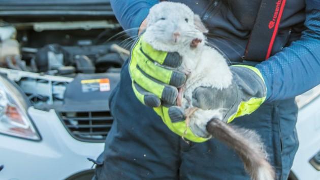 Eines der geretteten Tiere (Bild: Hermann Kollinger)