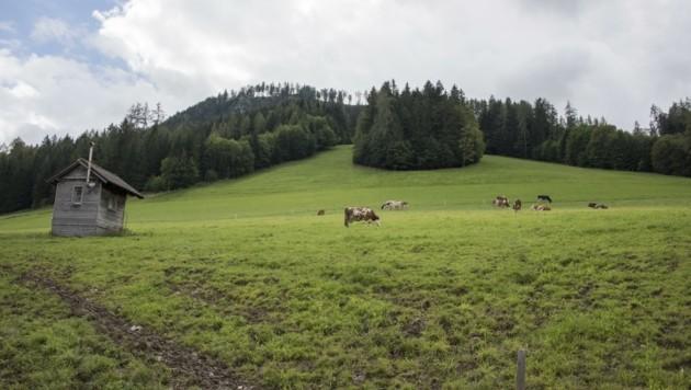 Wo aktuell Kühe grasen, soll das Skigebiet mit zehn zusätzlichen Pistenkilometern entstehen (Bild: Haijes Jack)
