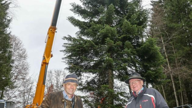 Christkindlmarkt Obmann Wolfgang Haider (l.) und der Hinterseeer Bürgermeister Paul Weißenbacher freuen sich, dass der Christbaum für den Residenzplatz in diesem Jahr aus Hintersee kommt. (Bild: www.neumayr.cc)