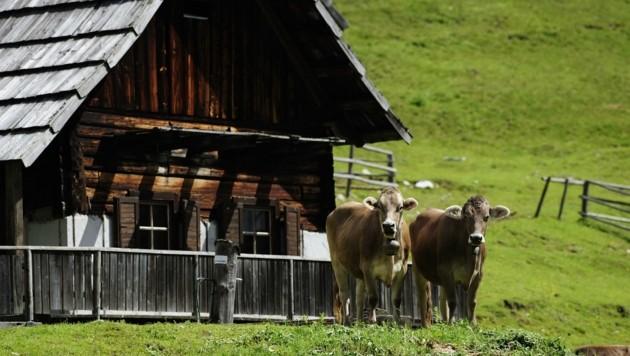 In der nächsten Sommersaison ist ein barrierefreies Naturerlebnis auf der Egger Alm möglich. (Bild: NLW Tourismus)