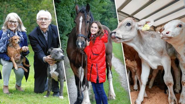 """Für Staffhündin """"Maja"""" haben wir einen Lebensplatz bei Familie Szlay gefunden. (links) Maggie Entenfellner mit Wallach """"Suilven"""" (Mitte) Jeden Tag leiden Nutztiere - wir kämpfen für sie. (rechts) (Bild: Reinhard Holl, zVg, Krone KREATIV)"""