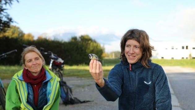 Projektleiterin Marion Chatelain (re.) mit Helferin Angelika Fritz beim Markieren der Meisen. Mit einer speziellen Technik werden die Vögel angelockt und gefangen, danach schnell wieder freigelassen. (Bild: Universität Innsbruck)