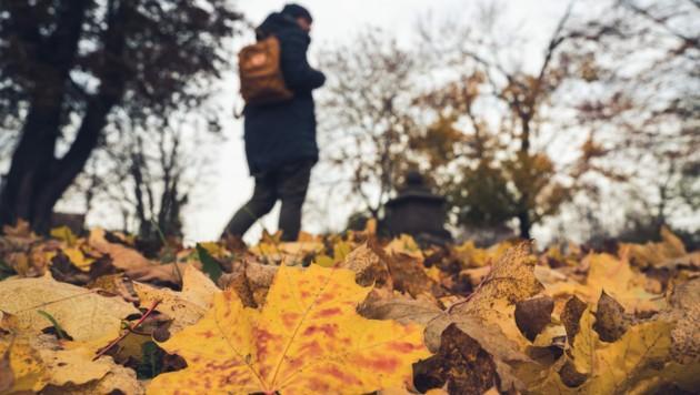 (Bild: ©Benjamin - stock.adobe.com (Symbolbild))