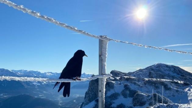 Der Reitsteig auf den Untersberg ist derzeit abschnittsweise schon sehr verschneit und empfiehlt sich daher zur Zeit nur geübten Bergsteigern mit guter Ausrüstung. (Bild: Karina Langwieder)