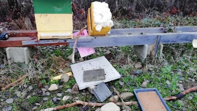 Zertreten und mit Steinen beworfen: 30.000 Bienen sind tot!