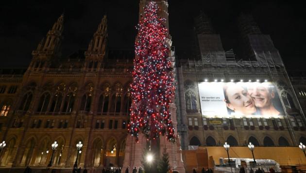 Der Christbaum am Wiener Rathausplatz (Bild: APA/HERBERT NEUBAUER)