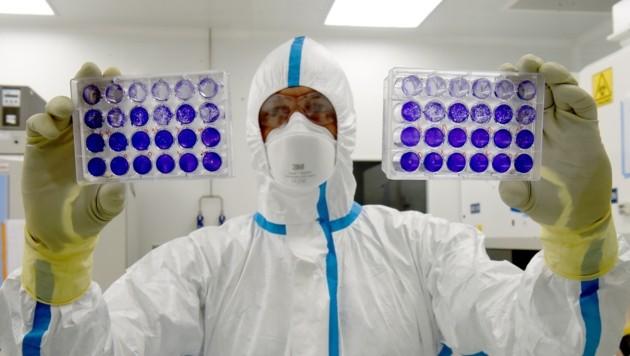 Diese Kulturplatten wurden mit dem Coronavirus infiziert. (Bild: AFP )