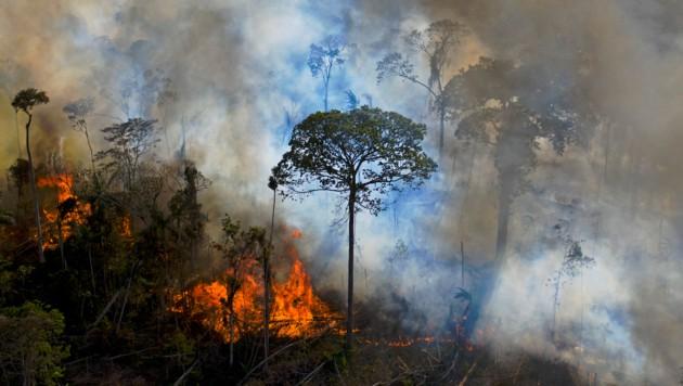 """Die """"Lunge der Erde"""" brennt. Die Brandrodungen im brasilianischen Amazonasgebiet haben in den vergangenen Jahren deutlich zugenommen. (Bild: AFP/CARL DE SOUZA)"""