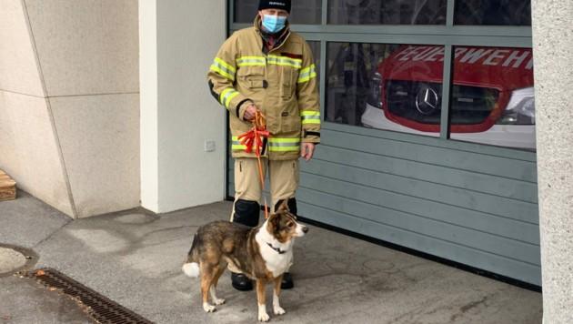 Während sich das Herrchen in Wiesing testen lassen ging, passte die Feuerwehr kurz auf den Vierbeiner auf. (Bild: zoom.tirol)